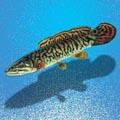 ильная рыба 4 буквы