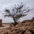 ядовитое дерево 5 букв img-1