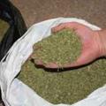 порошок марихуаны