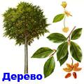 паркетное дерево 3 буквы - фото 3