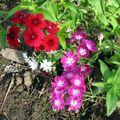 Пламенный цветок 5 букв сканворд