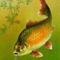 зеркальная рыба 4 буквы