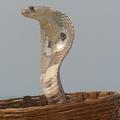 змея с капюшоном 5 букв - фото 5