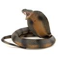 змея с капюшоном 5 букв - фото 7