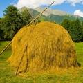 скошенная трава 5 букв - фото 11