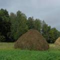 скошенная трава 5 букв - фото 5