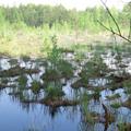 топь болото 7 букв - фото 7