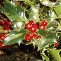 ядовитое дерево 5 букв - фото 7