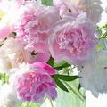 Цветок любви у китайцев 4 буквы