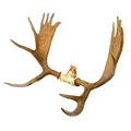животное с короной на голове - фото 11