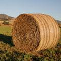 скошенная трава 5 букв - фото 6