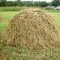 скошенная трава 5 букв - фото 10